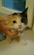 Кошка, Рязань