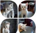 Котята в добрые руки, Кузнецк