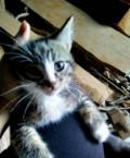 Отдам милых котят, Коряжма