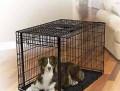 Клетка для средних и крупных собак Midwest i Crate, Владивосток