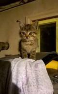 Красивые котята дарим, Белгород