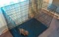 Клетка для всех пород собак и кошек. Арт. 2-3490, Екатеринбург