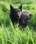 Пристраиваю собаку Таю, Медвежьегорск
