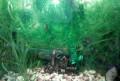 Украшение для аквариума, Шатки