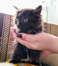Пушистый котёнок, Каменск-Уральский