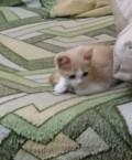 Котята ищут дом, Пенза