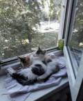 Кошки, Тарасовский