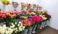 Цветочный магазин, Красные Ткачи