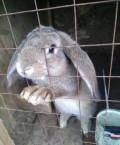 Кролики, Хотьково