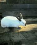 Кролики, Ярославль