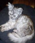 Кошечка в добрые руки, Волоконовка