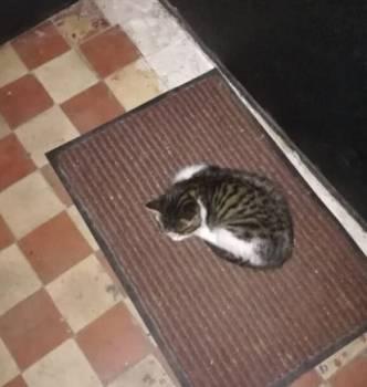 Котёнок, девочка два месяца