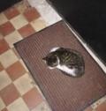 Котёнок, девочка два месяца, Ильинский