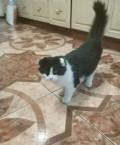 Кот, Михайловск