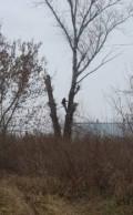 Безопасный спил(валка) деревьев любой сложности, Барнаул