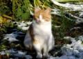 Рыже-белая молодая красавица ищет дом, Юрьев-Польский