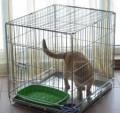 Клетка для собак щенков котят с поддоном, Выгоничи