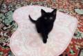 Котёнок в добрые руки, Плесецк