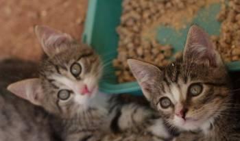 Милые котята ищут дом