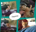Замурчательные котята только в добрые руки, Владивосток