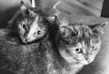 Кошки, 2 и 3 года, бесплатно, Петрозаводск