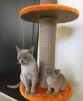 Кошечки «бурмушки», Правдинский