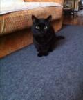 Отдам кота в связи с переездом, Ордынское