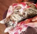 Кошка 2 месяца, Можайск