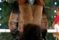 Продам натуральную шубу, длинные платья кораллового цвета, Астрахань