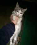 Кошка и котята, Инжавино