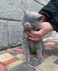 Кошечка в добрые руки, Шахты