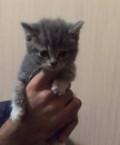 Котята в добрые руки, Стародуб