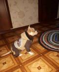 Одежда для собак, Обнинск