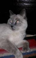 Кот, Анапа
