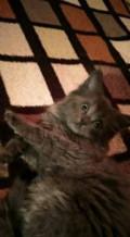 Кошка, Икша