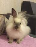 Кролик, Дубовое