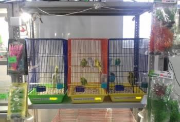 Попугаи волнистые, Череповец, цена: не указана
