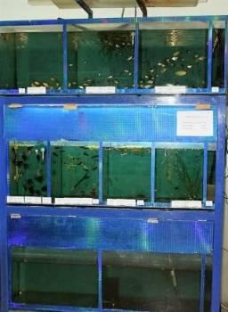 Продам аквариумную стойку, Асино, цена: 10 000р.