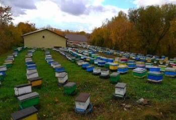 Пчелопакеты и пчелосемьи Карника от заводчика, Алейск, цена: не указана
