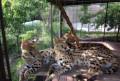 Котята африканского сервала, Ставрополь