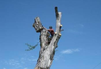 Спил, валка, кронировка деревьев, расчистка участков