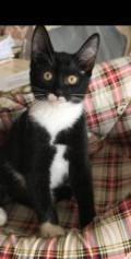 Котёнок, Махачкала