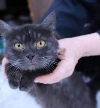 Необычная кошка только в добрые руки