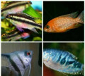 Рыбки, растения и аквариумы, Краснодар
