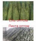 Елка новогодняя (Пихта, Макушка, Ель, Сосна, Лапки), Краснодар