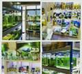 Рыбки, креветки, растения, декор, оборудование, Нижний Новгород