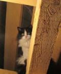 Ищем дом котятам, Белозёрский