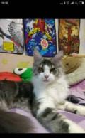 Кошка в разведение, Калининец