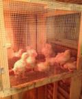 Цыплята бройлера, Кемерово