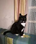 Кошки/коты, Донской
